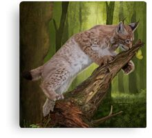 Lynx and a Butterfly Canvas Print