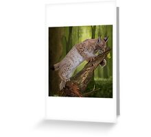 Lynx and a Butterfly Greeting Card