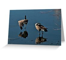 Stretching and preening Greeting Card