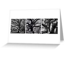Aging Trees Greeting Card