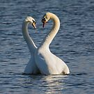 Swan Love by M.S. Photography/Art
