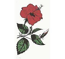 My Hibiscus - Digital Art Photographic Print
