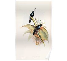 A monograph of the Trochilidæ or family of humming birds by John Gould 1861 V4 226 Poster