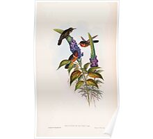 A monograph of the Trochilidæ or family of humming birds by John Gould 1861 V4 182 Poster