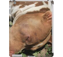 Pit Bull Dog in a Garden iPad Case/Skin