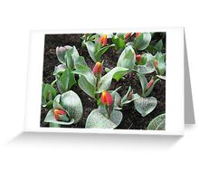 Cheeky Tulips - Keukenhof Gardens Greeting Card