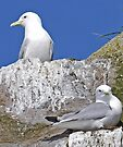 A Pair of Kittiwakes by Graeme  Hyde