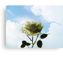 ROSE AND SKY Canvas Print