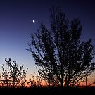 Moon-Landscape - Free State - South-Africa by Qnita