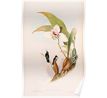 A monograph of the Trochilidæ or family of humming birds by John Gould 1861 V4 042 Poster