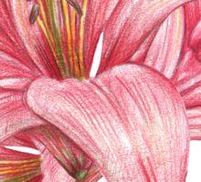 lily flowers_3 Sticker