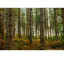 Bedgebury National Park Photographic Print