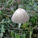 A small mushroom by Ana Belaj