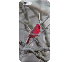 Cardinal in Thorn Tree iPhone Case/Skin