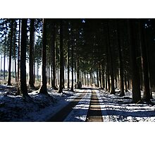 Afternoon in the woods Photographic Print