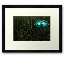 Abstract Spider on Web Framed Print