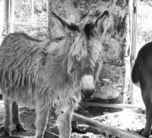Wild Irish Donkeys Sticker