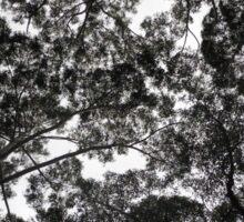 Eucalyptus, NSW, Australia Sticker