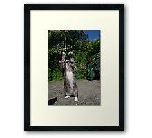 Dancing cat Framed Print