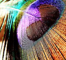 beautiful feather by webgrrl