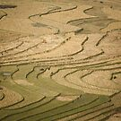 Terraced Rice fields, Tu Le Valley, Vietnam by Bob Ramsak