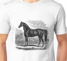 Vintage Morgan Horse Equestrian Horses Unisex T-Shirt