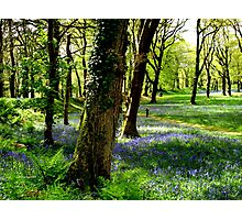 Bluebell Heaven Photographic Print