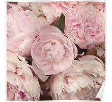 Pink Peony Flowers Poster