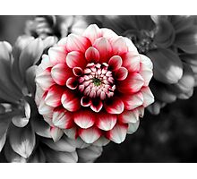 Selective Color Flower Photographic Print