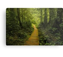 Olympic National Park Metal Print