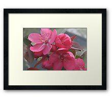 Crab apple tree by bs hilton Framed Print