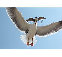 Seagulls Soaring Photographic Print