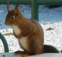 Aww ... my tum's so full of nuts! All gone! by Marilyn Grimble