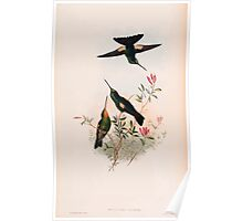 A monograph of the Trochilidæ or family of humming birds by John Gould 1861 V4 150 Poster