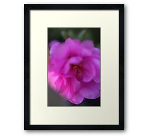 bright pink by bs hilton Framed Print