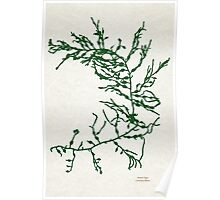 Green Seaweed Art Poster