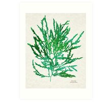 Sea Green Seaweed Art Art Print