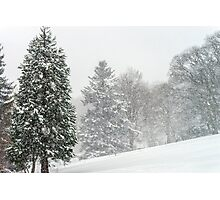 Beautiful winter forest while snow flurry, Vosges mountains Photographic Print