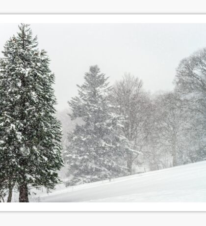 Beautiful winter forest while snow flurry, Vosges mountains Sticker