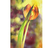 Dancing Tulip Photographic Print