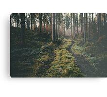 Boy walking through mystic forest landscape photography Metal Print