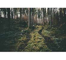 Boy walking through mystic forest landscape photography Photographic Print