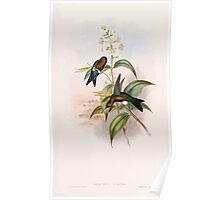 A monograph of the Trochilidæ or family of humming birds by John Gould 1861 V4 294 Poster
