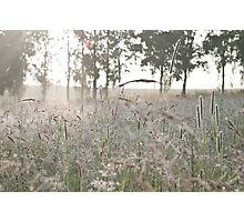 Morning Meadow Photographic Print