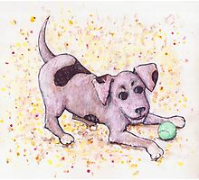 Playful Puppy with Tennis Ball Photographic Print