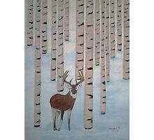 Winter Birch  Photographic Print