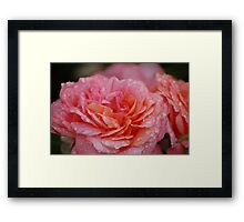 Celebrating Life Framed Print