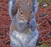 Please God give me nuts by oulala