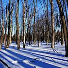 Shadows In The Woods by Debbie Oppermann