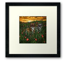 Tiger's In The Poppies  Framed Print